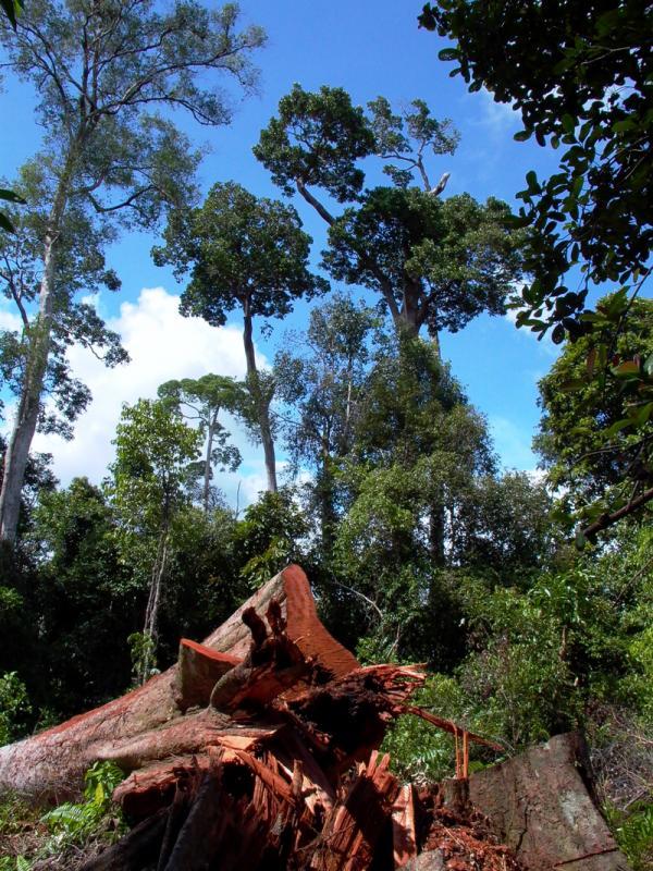Bakongan, Kalimantan