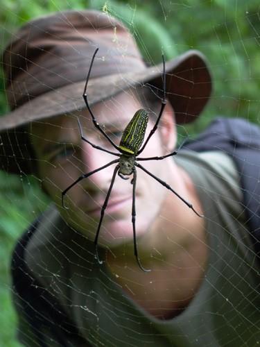 Spider Benoît